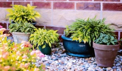 Gardening Tip: Artist's Palette