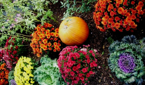 Gardening Tip: Fall is Coming!
