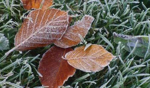 Gardening Tip: Winter is NEAR!