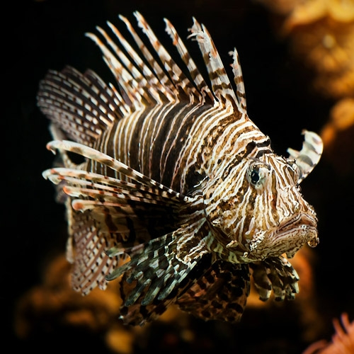 Marine & Saltwater Fish
