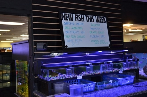 New fish every week!