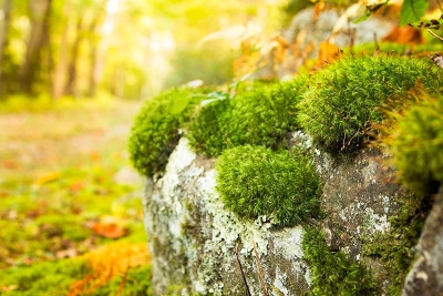 Solve Your Moss Issues