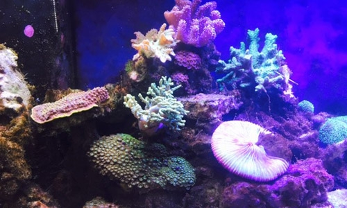 Corals/Reef