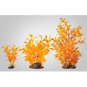 Glow Elements Large Tangerine Ludwigia