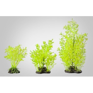 Green Lindernia