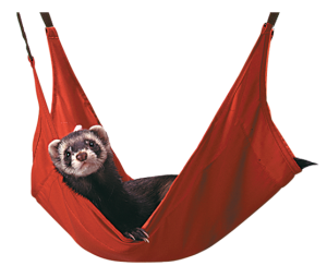 Ferret Leisure Lounge