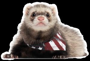 Ferret American Flag Bandana