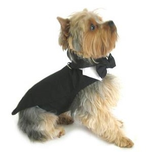 Black Dog Harness Tuxedo - With Tails, Bow Tie, & Cotton Collar