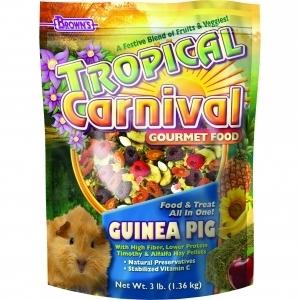 Tropical Carnival Guinea Pig