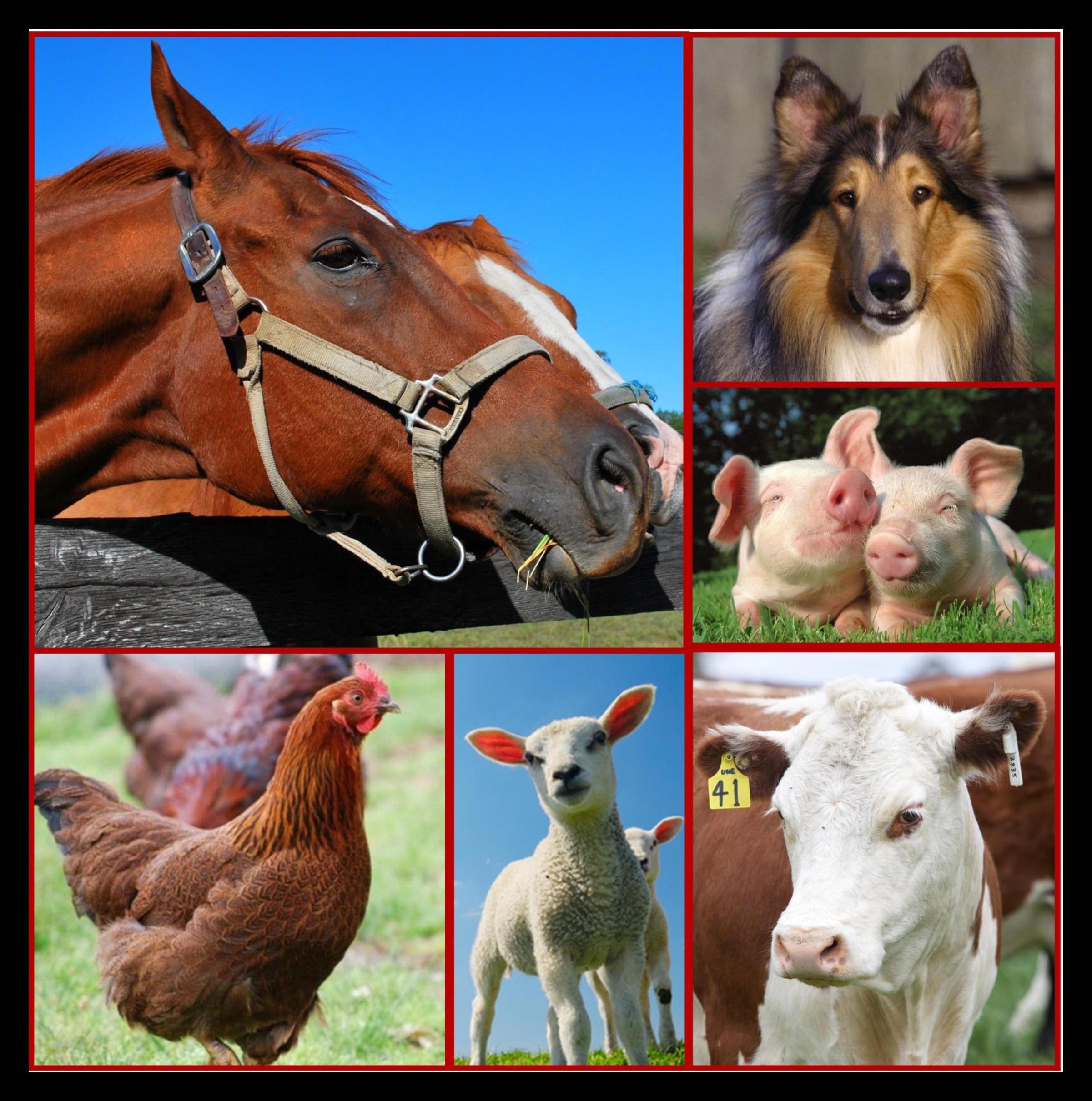 animal collage image
