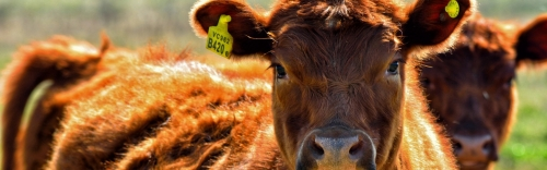 Your Herd is an Investment