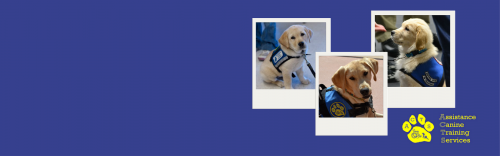 Sepetember is National Service Dog Month
