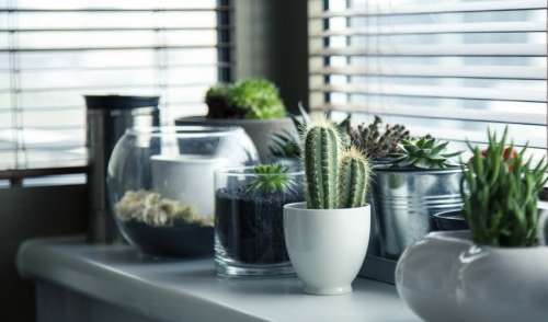 Three Secrets to Cactus Success