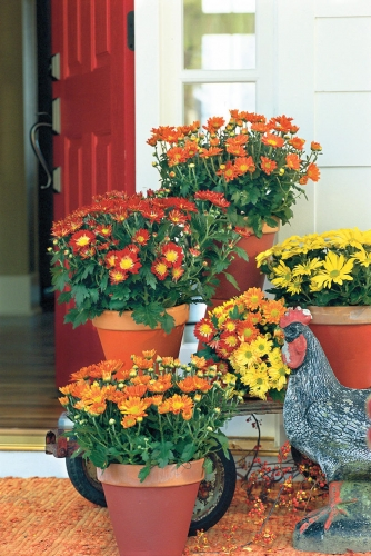Fall Planting & Decorating