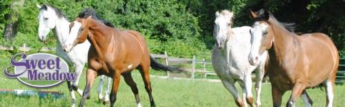 Visit Sweet Meadow Farms