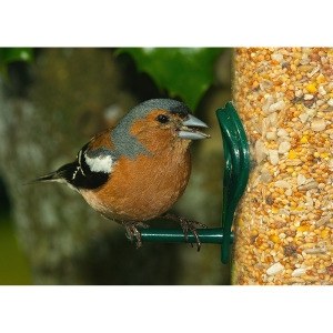25% Off Select Clearance Bird Feeders